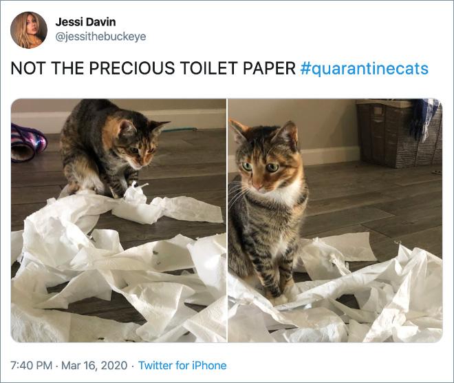 NOT THE PRECIOUS TOILET PAPER #quarantinecats