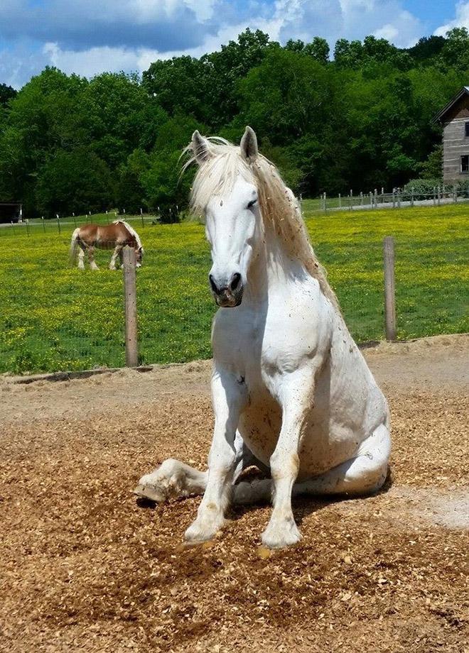 Awkwardly sitting horse.