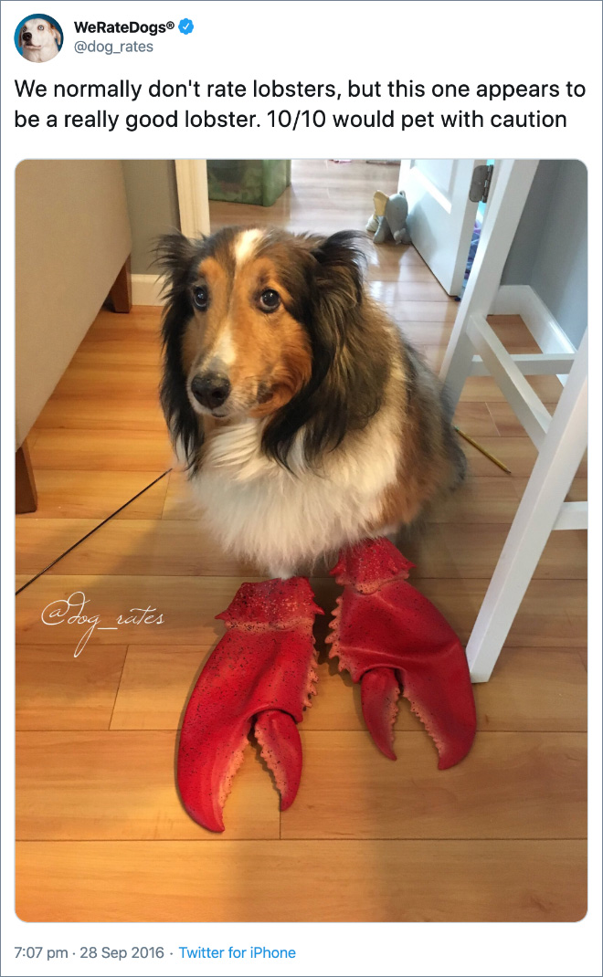 We normally don't rate lobsters, but this one appears to be a really good lobster. 10/10 would pet with caution