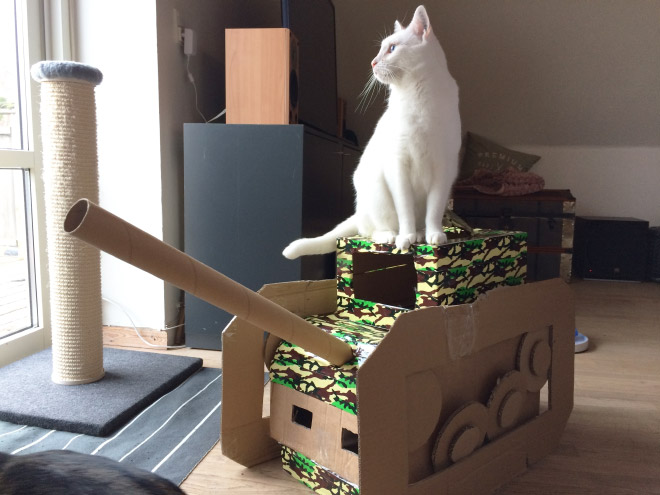 Cats have started building an army!