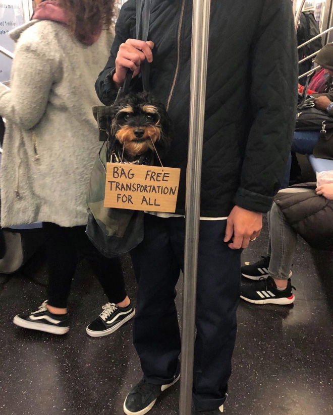 Brave dog protesting annoying things.