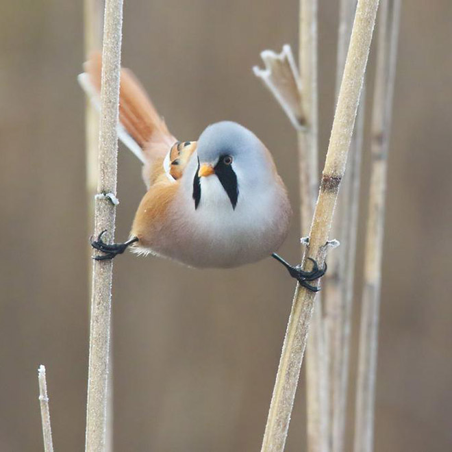 This bird sure knows how to make a perfect split.