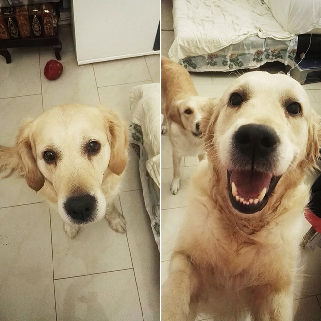 Before and after being called a good boy.