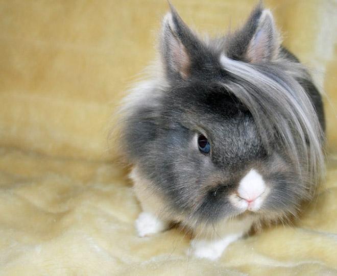 Emo bunny.