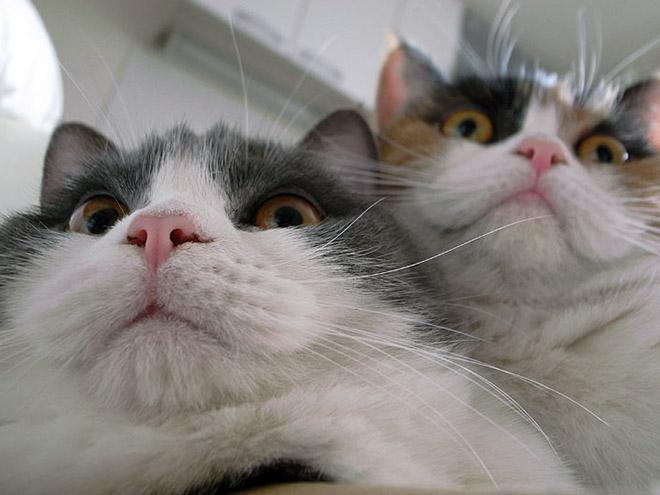 Selfie taking cats.