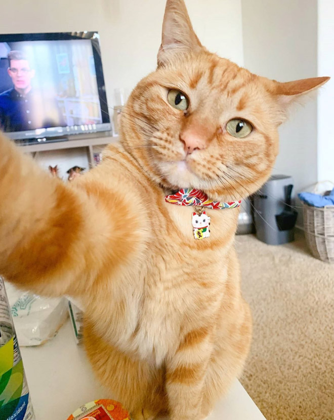 Selfie taking cat.