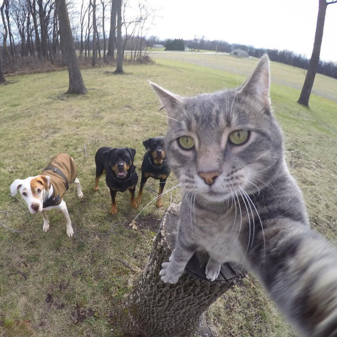 Cat taking a selfie.