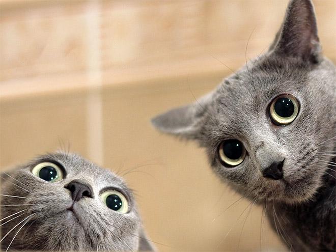 Cat taking a selfie.