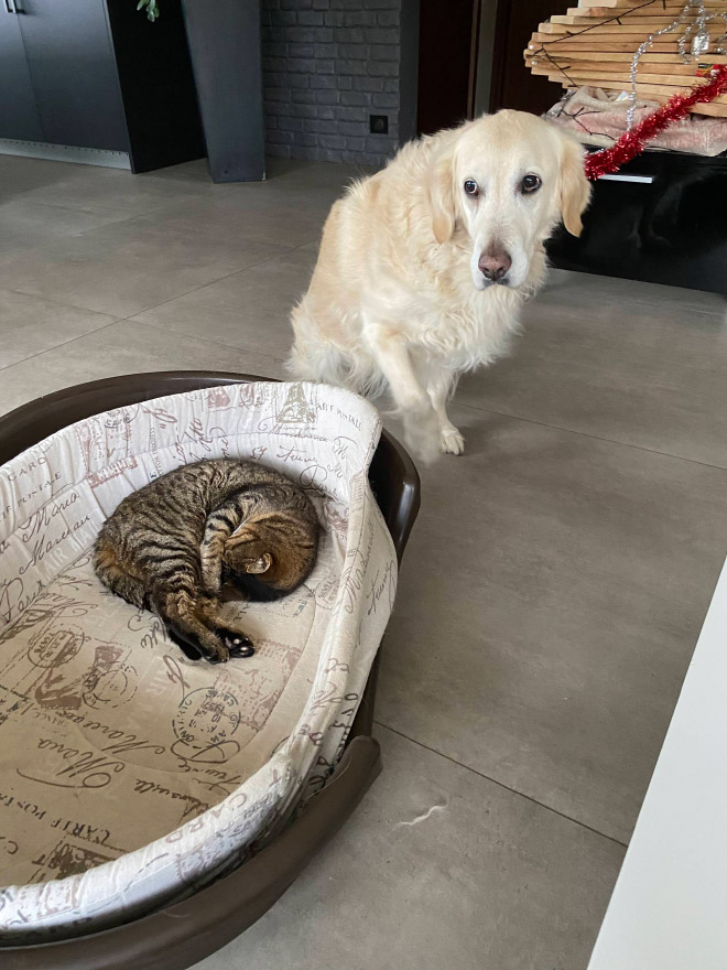 Dog bed stolen by cat.