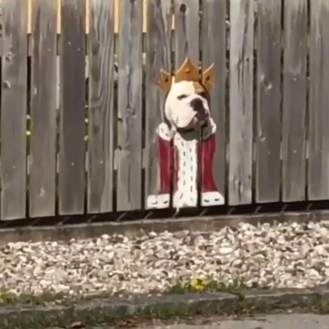 11 Hilarious Reasons Why Fences Don T Deter Dogs Petguide