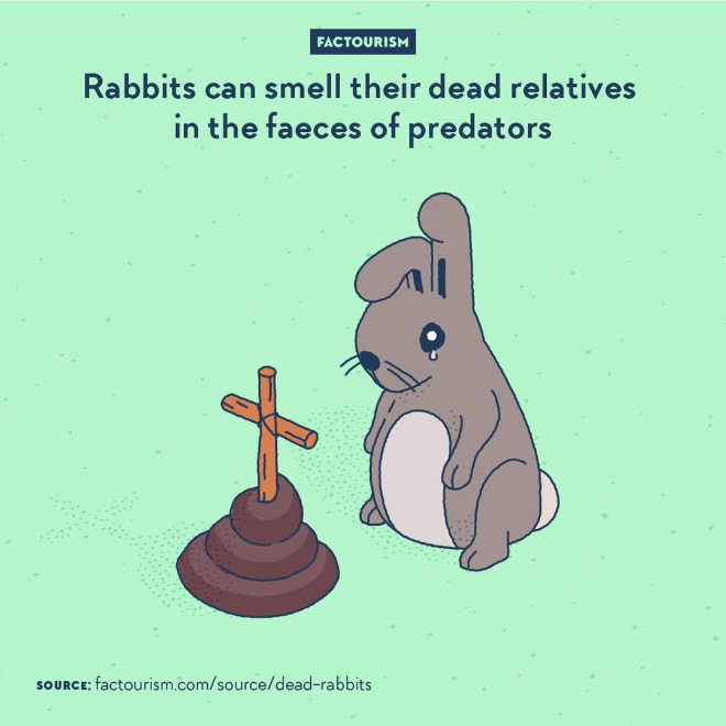 Not only rabbit can recognise the smell of faeces of known predatory species, but it has been found that they are also able to distinguish the ones that has specifically been eating other rabbits. If an area houses an animal a little too fond of eating rabbits in the near past, then it is probably best to avoid this place for a while.