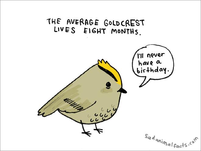 Sad animal fact.