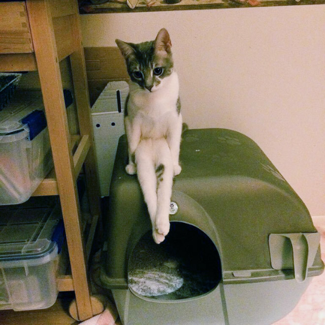 Some cats are weird sitters.