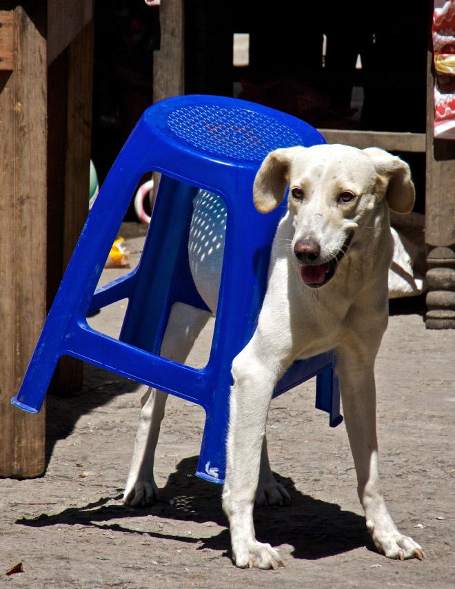 Hauskat-koirakuvat