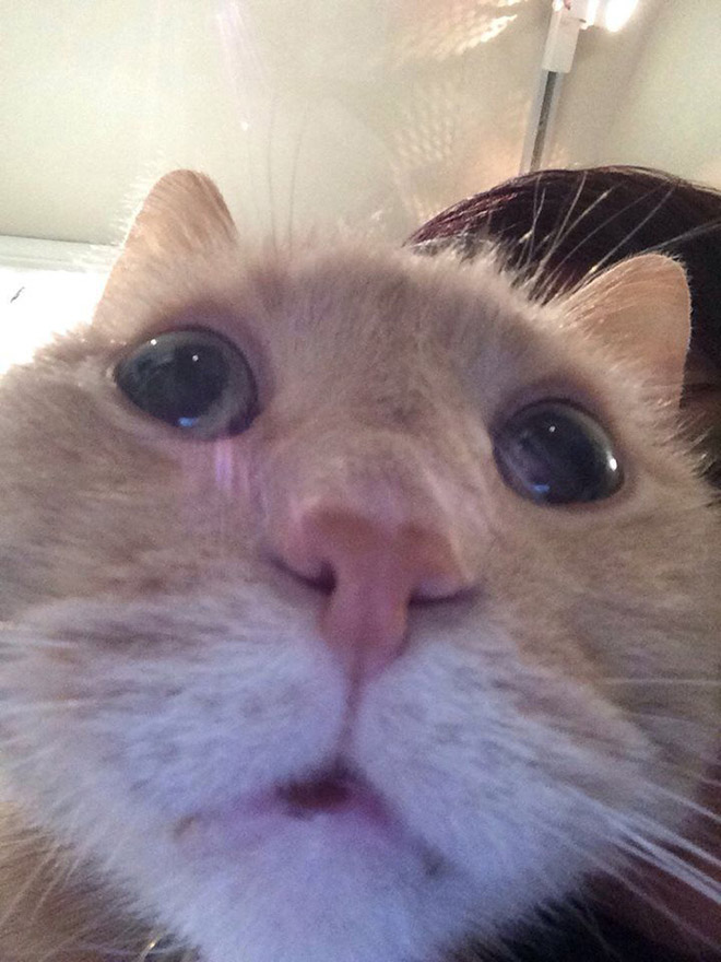 Front camera cat photo.