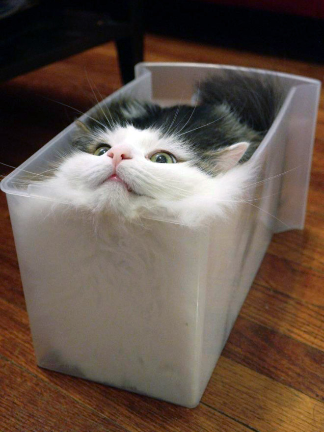 Melting cat.