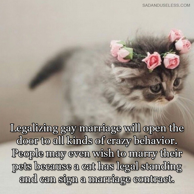 Legalizing gay marriage will open the door to all kinds of crazy behavior. People may even wish to marry their pets because a cat has legal standing and can sign a marriage contract.