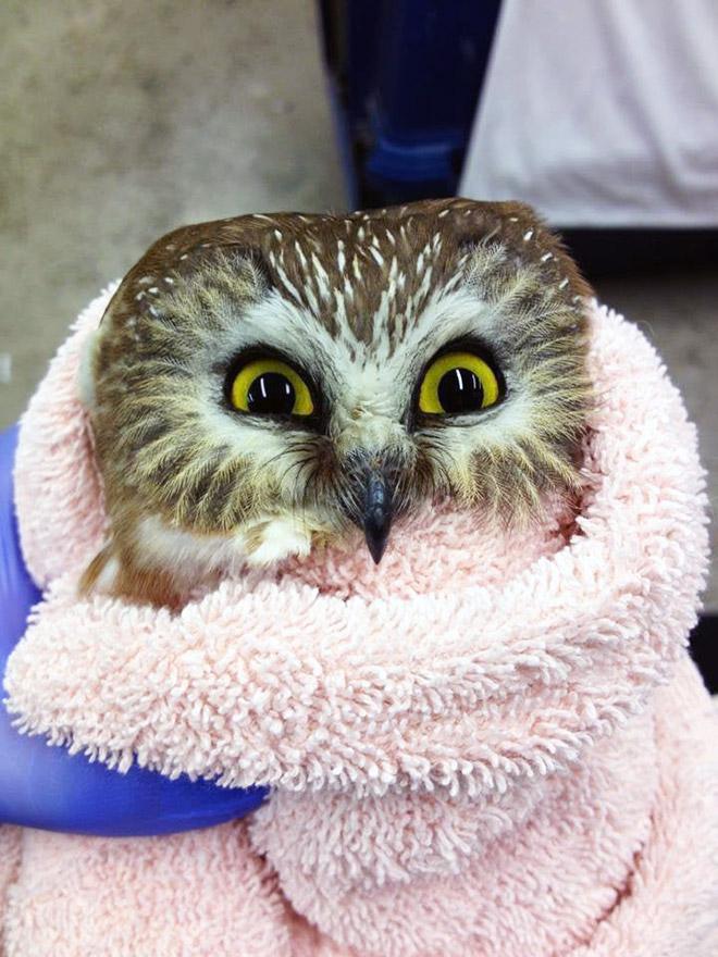 Adorable owl burrito.