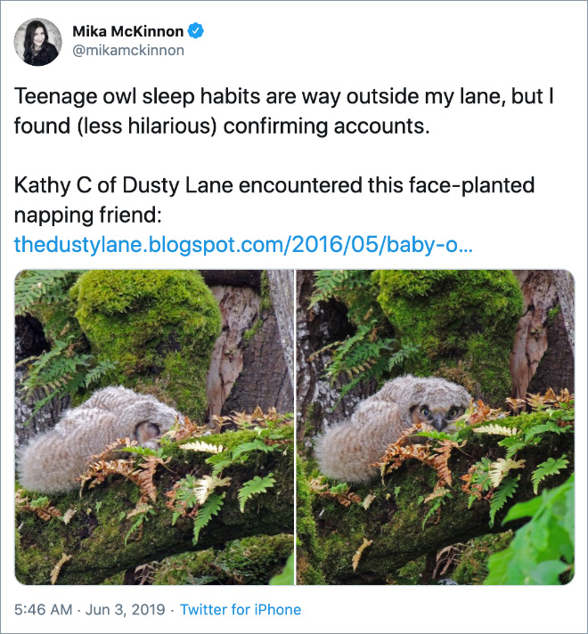 Teenage owl sleep habits are way outside my lane, but I found (less hilarious) confirming accounts.