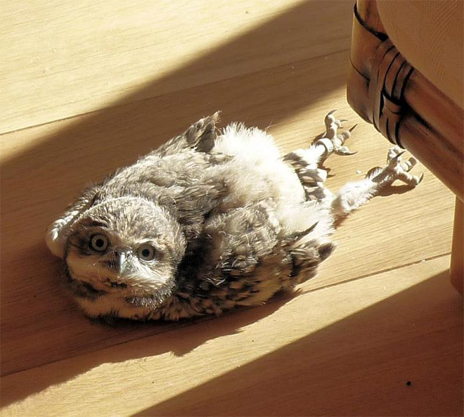 People Are Finding Out That Some Owls Sleep With Their Faces Down