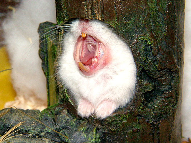 Yawn.
