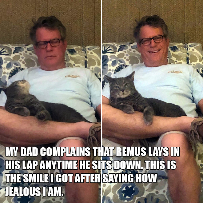 My dad complains that Remus lays in his lap anytime he sits down. This is the smile I got after saying how jealous I am.
