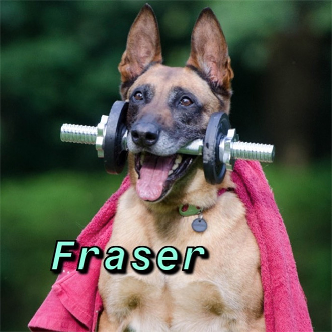 You are this dog based on your name.