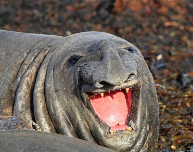 ROFLing seal.
