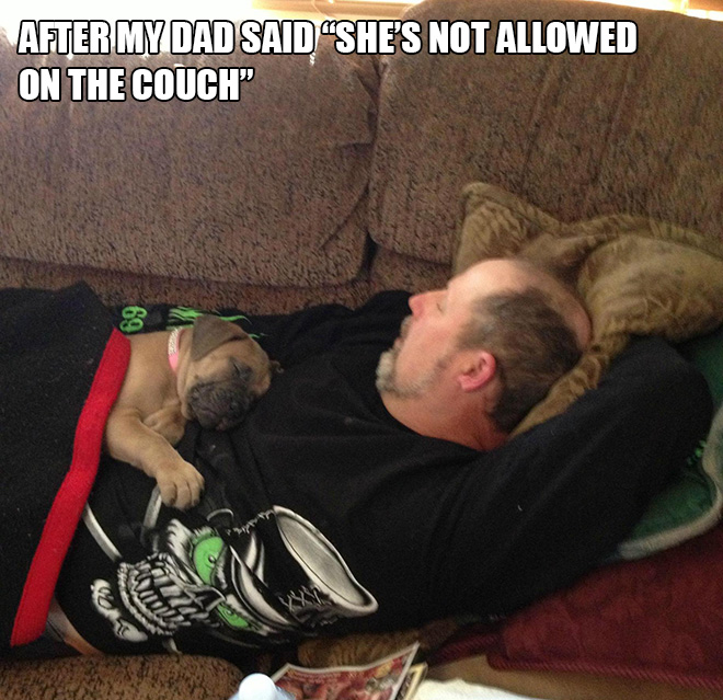 Dog vs. dad.