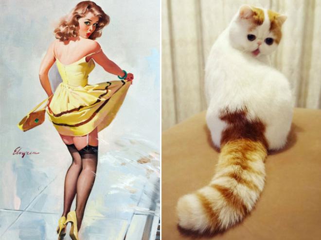 Pinup cat.