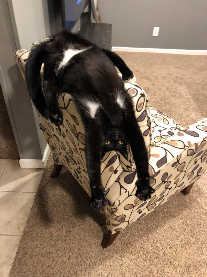Some cats are weird...
