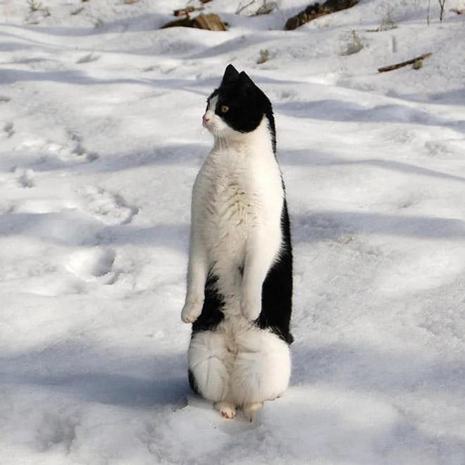 cat-penguins10.jpg