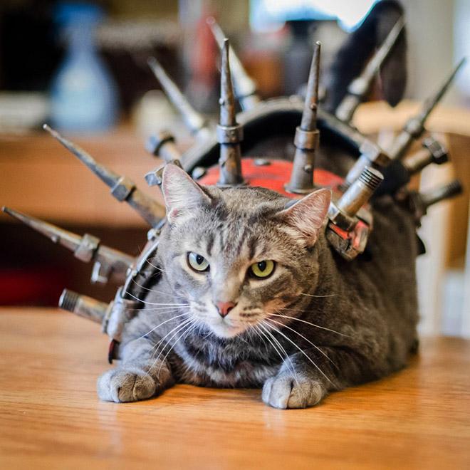 Cat in a battle armor.