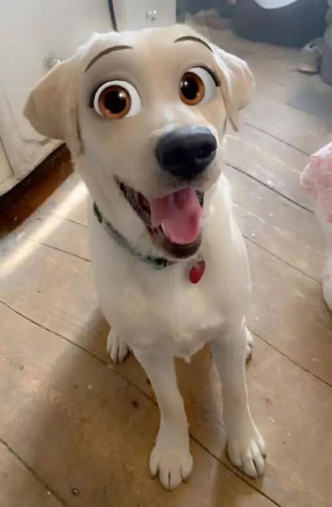 Disney eyes snapchat filter for dogs.