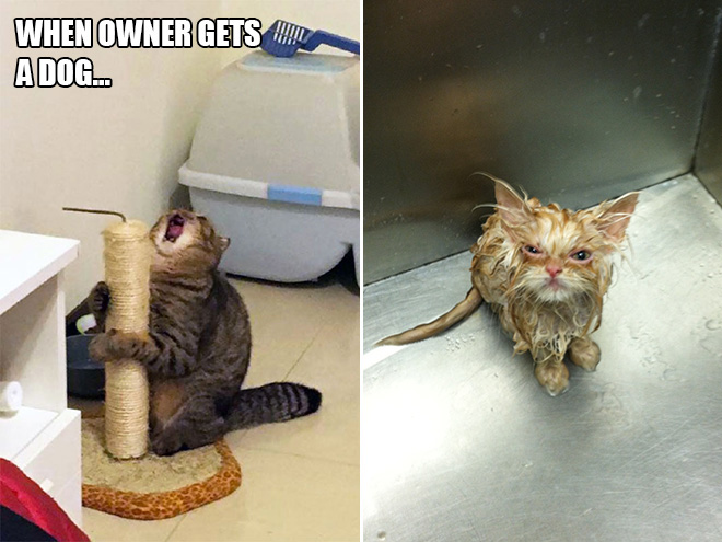 Cats are such drama queens! Each and every one of them deserves an Oscar.