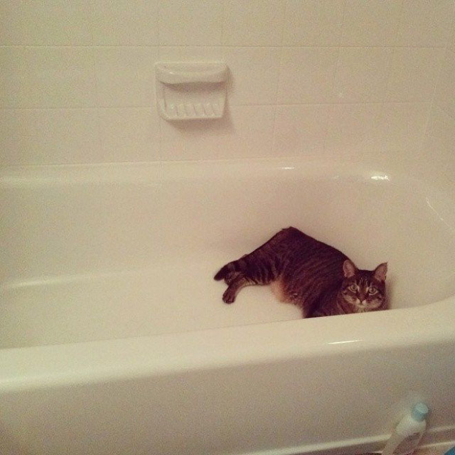 Cats really don't care about privacy.