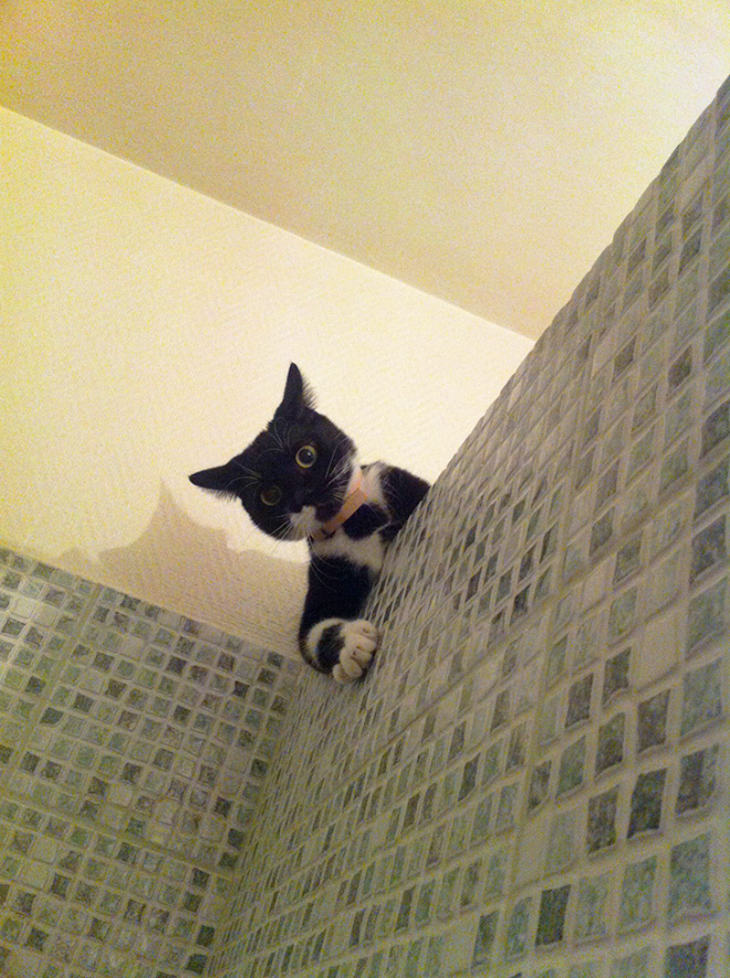 Cats Really Don't Care About Your Privacy