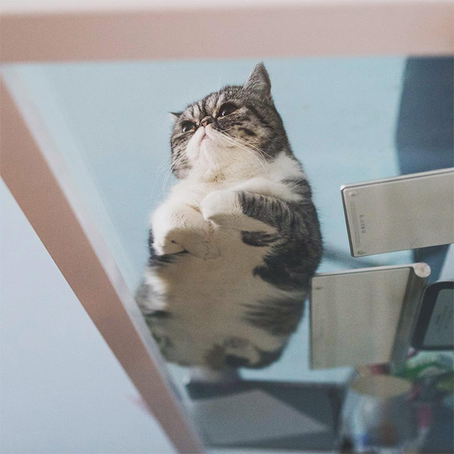 UFO cat flying back to his home planet.