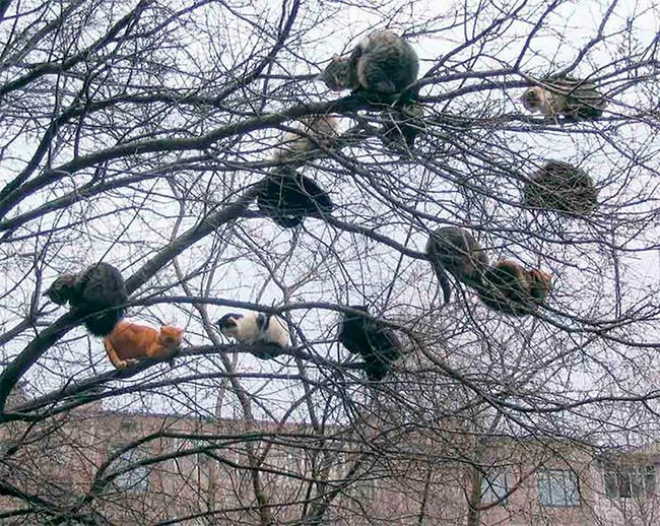 These cats were raised by birds.