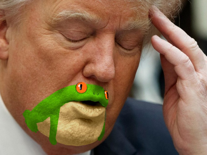 How you noticed how much Trump's chin look like a frog?