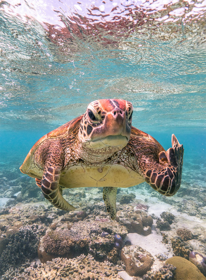 The Finalists of The 2020 Comedy Wildlife Photography Awards Have Been Announced!