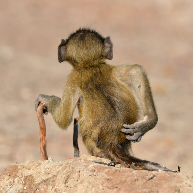 Funny photo from Comedy Wildlife Photography Awards 2020.