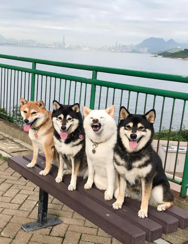 Funny photobombing dog.