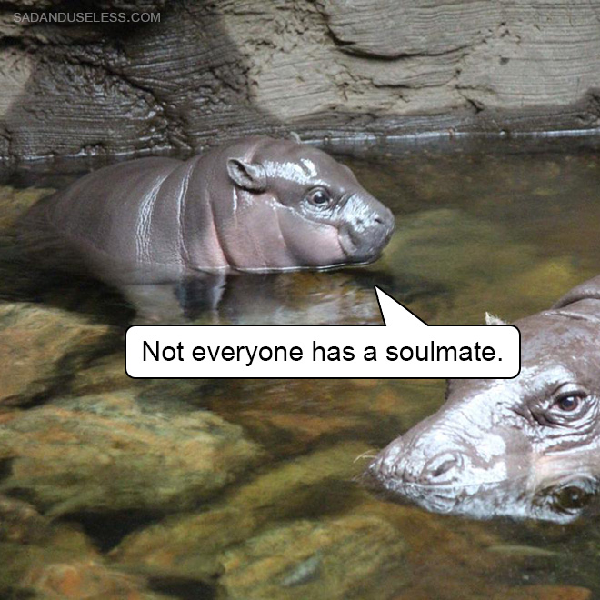 Not everyone has a soulmate.