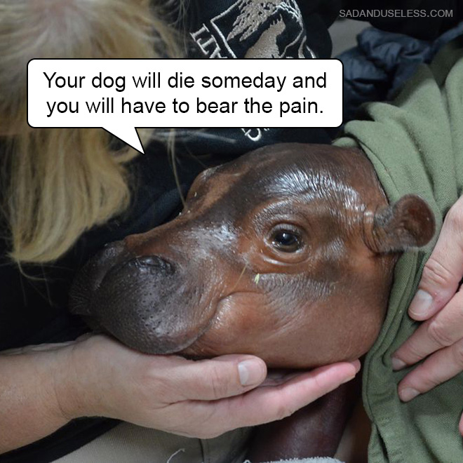 Your dog will die someday and you will have to bear the pain.
