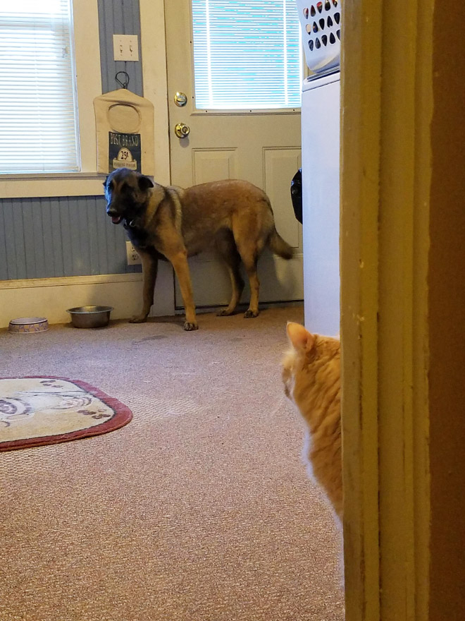 Terrified of cat.