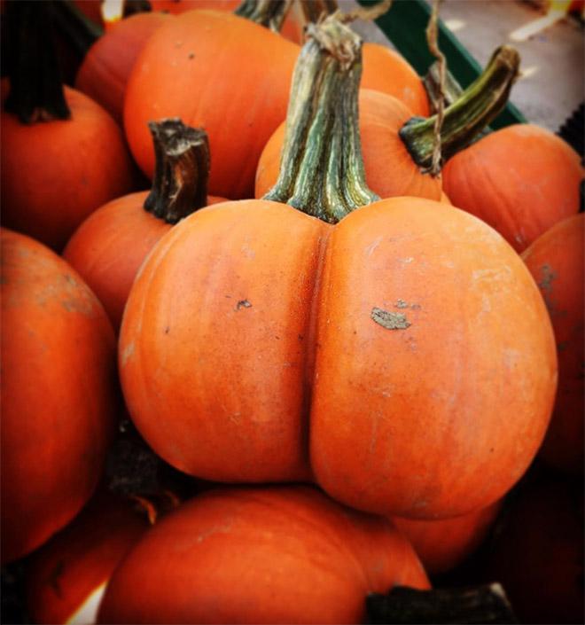 Beautiful pumpkin butt.