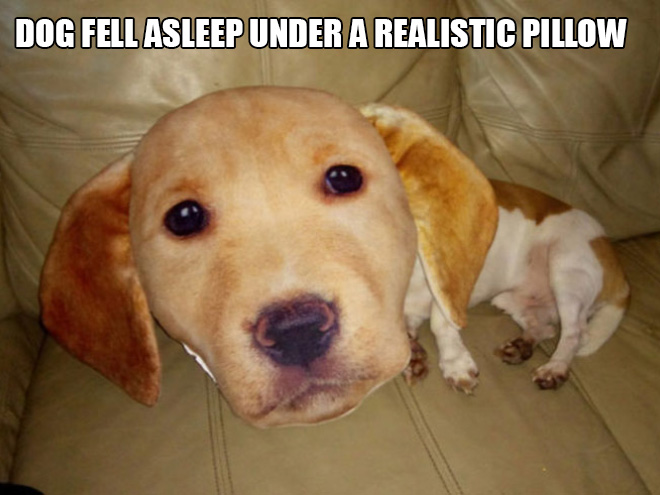 Dog vs. 3D printed pillow.