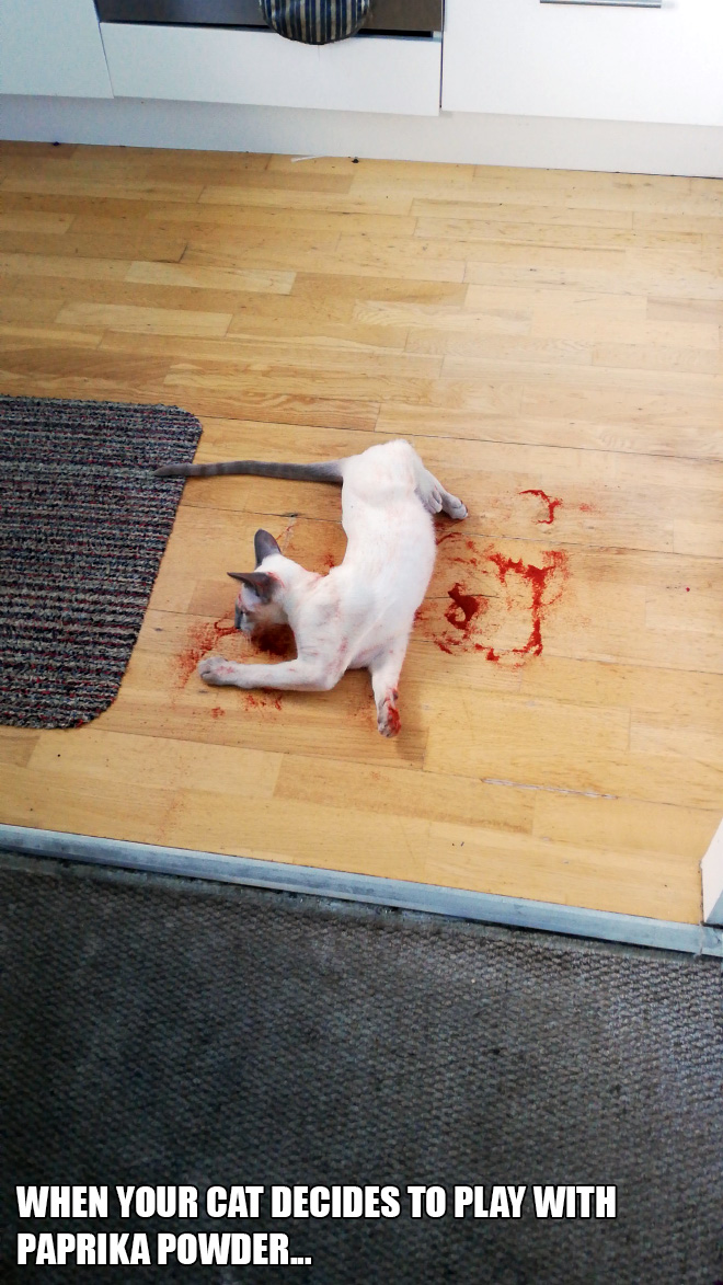 when your cat decides to play with paprika powder...