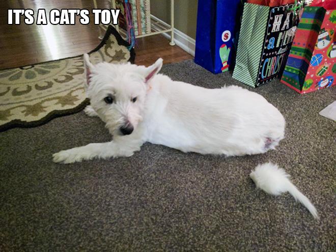 It's a cat's toy.